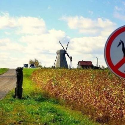 El ingenioso liderazgo de Don Quijote